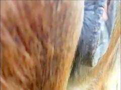 Dos nenas lamiendo polla de perro