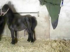 Embarazada follada por caballo