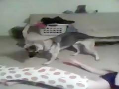 Que bueno perrito