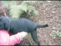 Morenita Cachonda pone duro al Perro