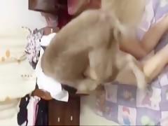 Completo al perro sin pagar
