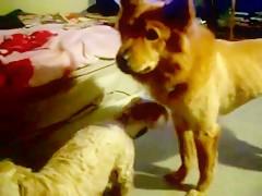 el perro la peta estilo metralleta