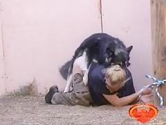 Perros a Lametazos con la japo