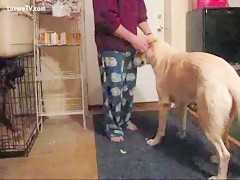 Chupa perro amalilla