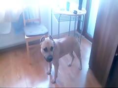 Rubia y perro grande