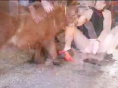 Consolador y mini caballo