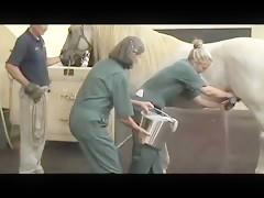 stallion semen collection